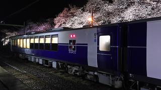 2019bunsuiyozakura16.jpg