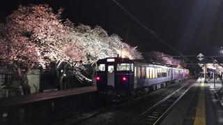 2019bunsuiyozakura17.jpg