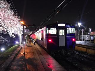 2019bunsuiyozakura10-2.jpg
