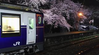2019bunsuiyozakura15.jpg