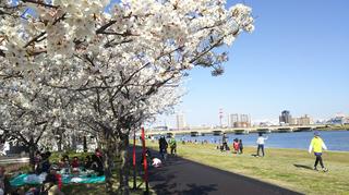 2019yasuragitei-sakura18.jpg