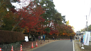 kashiwazaki-kouyou2019-1.jpg