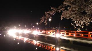 takadayozakura2021-11.jpg