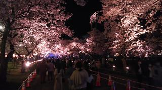 takadayozakura2021-18.jpg
