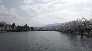 takadayozakura2021-3.jpg
