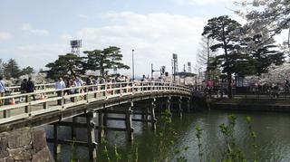 takadayozakura2021-5.jpg