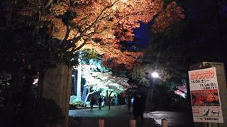 yahiko-kouyou2019-1.jpg