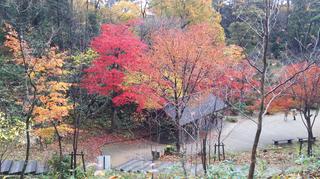 yahiko-kouyou2019-10.jpg