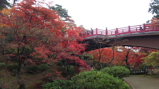 yahiko-kouyou2019-11.jpg