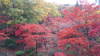 yahiko-kouyou2019-13.jpg
