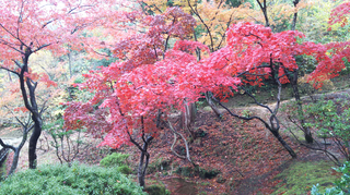 yahiko-kouyou2019-15.jpg