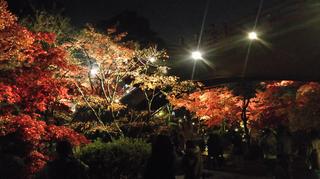 yahiko-kouyou2019-20.jpg