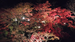 yahiko-kouyou2019-23.jpg
