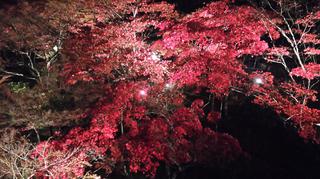 yahiko-kouyou2019-24.jpg
