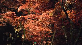 yahiko-kouyou2019-26.jpg