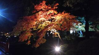 yahiko-kouyou2019-27.jpg