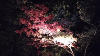 yahiko-kouyou2019-28.jpg