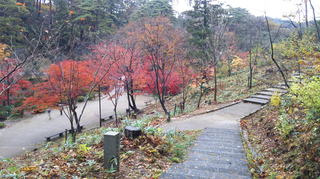 yahiko-kouyou2019-9.jpg